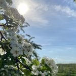 Jar v modransk8ch vinohradoch
